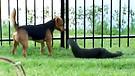 Kutya és vidra különleges barátsága